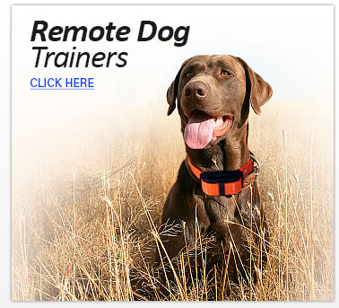 Remote Dog Trainers
